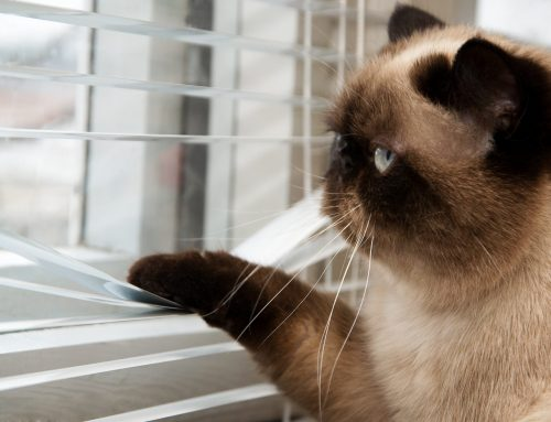 Need Your Blinds Repaired?
