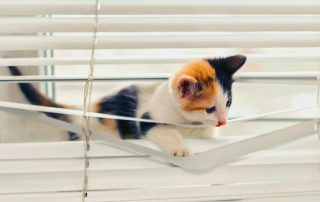 Kitty Cat playing in Window Blinds