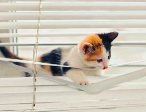 Have Your Pets Destroyed Your Blinds?